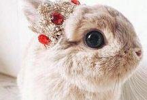 : Bunnies  :