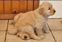 Nurrh doggies