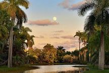 Photos of Fairchild / Photos of our beautiful tropical paradise!  / by Fairchild Tropical Botanic Garden