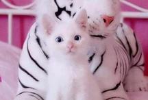 Gatos y más gatos. / Gatos, mi animal preferido y con el que me siento identificada.