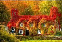 Краски природы