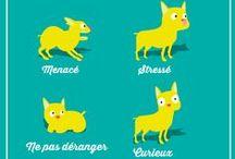 Nos astuces pour vos animaux / Découvrez toutes nos idées pour prendre soin de vos animaux de compagnie.