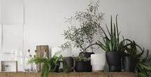 green // Grün! / plants indoor
