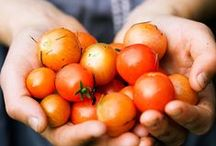 Les bonnes tomates cerises / Avec 578 producteurs partenaires, nous pouvons vous proposer de bonnes tomates cerises avec notre marque Mon Marché Plaisir !