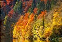 Saveurs d'automne ! / Des ambiances, des idées et des recettes pour buller lorsque les feuilles tombent.