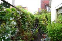 Balkon und Garten