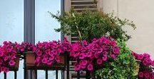 Balcony Garden Ideas / No garden? No problem! Encourage all kinds of wildlife and create your own colourful outdoor space you can be proud of. http://www.lovellnewhomes.co.uk/
