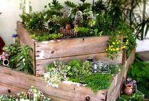 groen/tuin