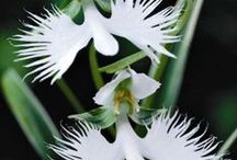 Gorgeous Orchids / Orchids  make our soul blossom. Started planting & learning about orchids
