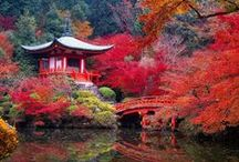 Happy Japan Day / Places of wonder to visit in Japan.