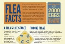 Infographics / We've gathered some helpful information for your pets.