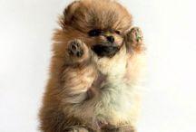 Cuteee :3 / Puppies...kittens...piggies...adorable babies....etc
