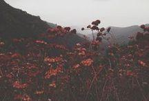 Photos: Nature