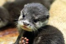 Otter....licious / Otters