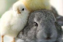 Eggs, Chicks & Bunnies
