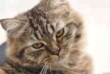 Cat 4 Love / My 3 beautiful Cat 1. Cleo born 2005 2. Possum born October 2013 3. Muffin born February 2014
