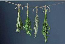 piante e erbe