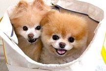 Pets ❤️ / Referências para um novo lar! Bichos, decoração e fofuras!