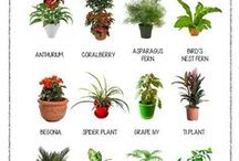 """gardens and plants and """"THE HERB"""" / Nature"""
