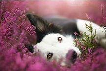 Beautiful Pet Photography