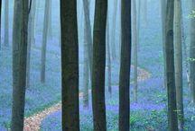 Trees and tree bark