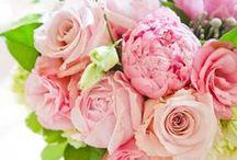 Pink. Coral. Blush