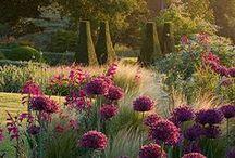 """pomysły do ogrodu / wyjątkowe ,stylowe i piękne pomysły do każdego nawet najmniejszego kawałka """"ziemi"""""""
