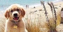 Cute dogs / The cutest dogs around the world #dogs #cute