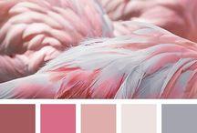 Palettes et couleurs