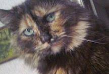 Кошка Ася / Всё о моей кошке