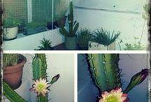 cactus y suculentas / by Verónica Wolff