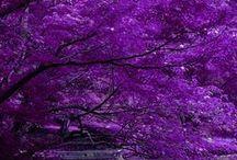 PURPLE****Фиолетовый