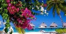 Iles ou Paradis / Polynésie et autres Maurice, Maldives des plages, faune et flore d'îles pour rêver.