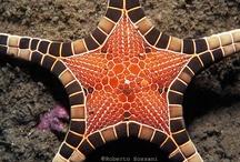 Sea Life / by bonnie iannotta