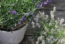 June Garden Ideas / Winter's here already and while we say goodbye to the warm weather it doesn't mean we have to put away the gardening gloves. There's still plenty of fun to be had so here's a few ideas to give you a little inspiration. Happy winter gardening.