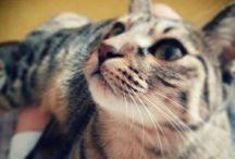 Hoya~ / Cat