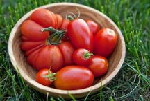 GARDENING: vegetable and herb