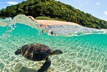 Hawaii / Inspiration for my trip to Hawaii.