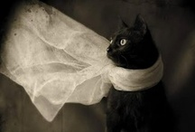 ^-^ Black Cats ^-^ / Dedicated to Delilah. / by judy b