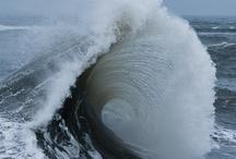 Ocean Dwellers  / by Velvet Norton