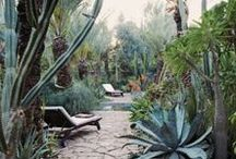 Garden & Patio / Landscape and garden design. Where the clean lines of architecture meet the beauty of nature.