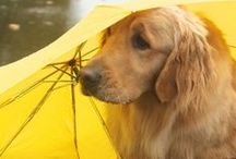 Parasols & Umbrellas / by Karen Stanton-Gentry