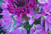 flowers / by Teresa Kisko