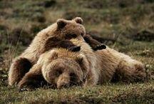 Bears / by Karen Stanton-Gentry