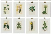 {wedding} botanical / by B.LOVED