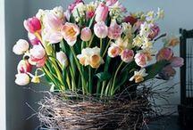 Easter/Spring / by Amanda Pokora