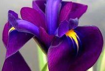 Flower Perfection / by Mai Kohtz