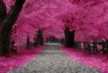 Me gusta pink! / by Becky Sagal