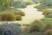 drought-tolerant landscapes