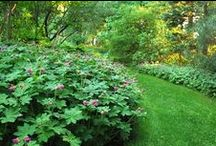 M Residence - Pool Garden / Easy care trees and perennials for the gardens around the Pool area.